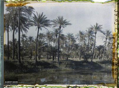 Irak, Bassorah, Palmeraie autre vue. Dans une palmeraie