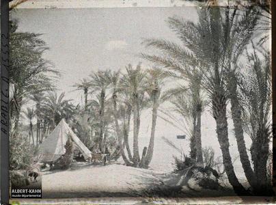 Arabie, Akaba, Palmeraie campement chérifien. Campement des forces arabes du royaume du Hedjaz dans une palmeraie au bord du golfe