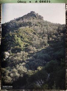 Grèce, Corfou, Bois d'Oliviers. Bois d'oliviers