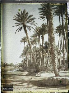 Algérie, Colomb - Béchar, La Palmeraie autre aspect. La palmeraie vue des bords de l'oued Ouakda