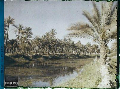Irak, Bassorah, Palmeraie. Dans une palmeraie