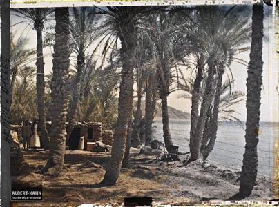 Arabie, Akaba, Palmeraie. Construction dans une palmeraie au bord du golfe d'Aqaba