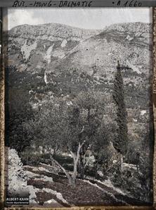 Raguse, Terrasse d'oliviers à la terre retournée: 1 cyprès, 1 caroubier, 1 figuier.Terrasse d'oliviers