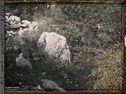Raguse, Végétation naturelle: rocher avec lichens de 2 couleurs.Végétation naturelle: rocher avec lichens de deux couleurs