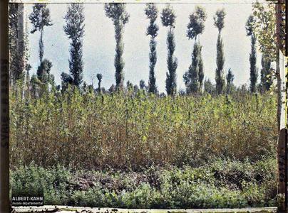 Syrie, Damas, Les Jardins de Damas : Culture du Chanvre, autre cliché. Culture du chanvre