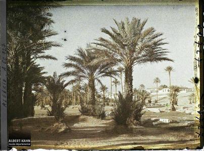 Algérie, Colomb - Béchar, La Ville et la Palmeraie. La Palmeraie au bord de l'oued Ouakda, avec la ville européenne à l'arrière-plan