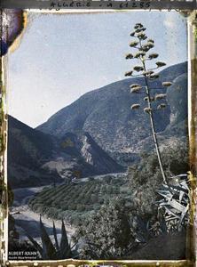 Algérie, La Chiffa, Les Gorges à Sidi Madani. Les gorges à Sidi Madani